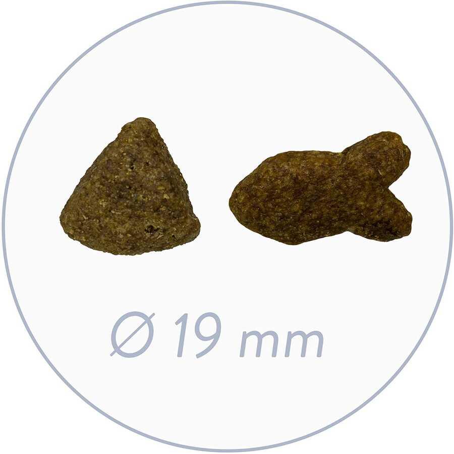 Bosch Glutensiz Somon Balıklı ve Patatesli Köpek Maması 15 KG