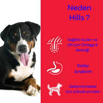 Hills Kuzu Etli Köpek Maması 18 KG