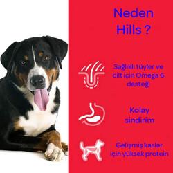 Hills Kuzu Etli Yaşlı Köpek Maması 14 KG - Thumbnail