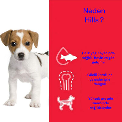 Hills Puppy Large Breed Büyük Irk Yavru Köpek Maması 14.5 KG