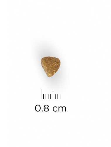 Hills Tavuklu Yavru Kedi Maması 5 KG