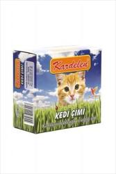 Flip - Kardelen Kendi Kutusu İçinde Büyüyen Kedi Çimi