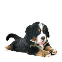 La Vital Somonlu Büyük Irk Yavru Köpek Maması 12 KG - Thumbnail