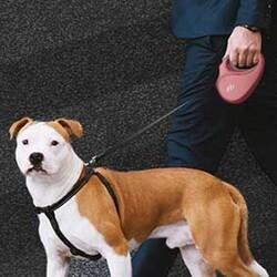 Doggie Master Serisi Otomatik Köpek Gezdirme Tasması Small - Thumbnail