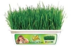 Quik - Quik Kendi Kutusu İçinde Büyüyen Kedi Çimi