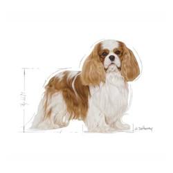 Royal Canin Cavalier King Charles Köpek Maması 3 KG - Thumbnail