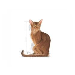 Royal Canin Exigent Kedi Maması 4 KG - Thumbnail