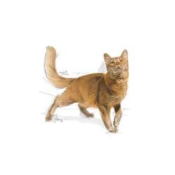 Royal Canin Fit 32 Kedi Maması 10 KG - Thumbnail