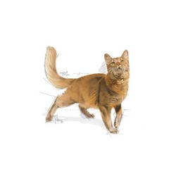Royal Canin Fit 32 Kedi Maması 4 KG - Thumbnail