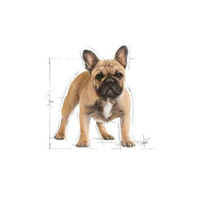 Royal Canin French Bulldog Köpek Maması 3 KG