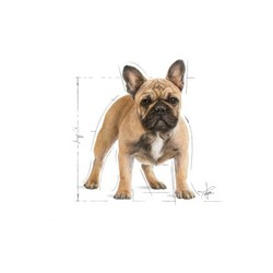 Royal Canin French Bulldog Yavru Köpek Maması 3 KG - Thumbnail