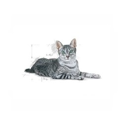 Royal Canin İndoor Yaşlı Kedi Maması 3.5 KG - Thumbnail