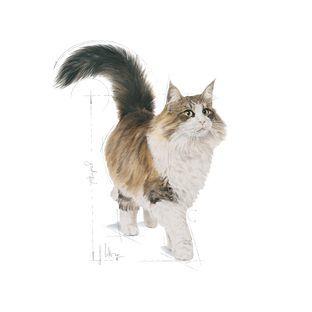 Royal Canin İnstinctive Kedi Konserve Maması 85 GR