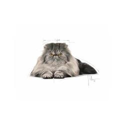 Royal Canin Persian Kedi Maması 2 KG - Thumbnail