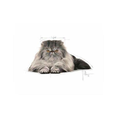 Royal Canin Persian Kedi Maması 4 KG