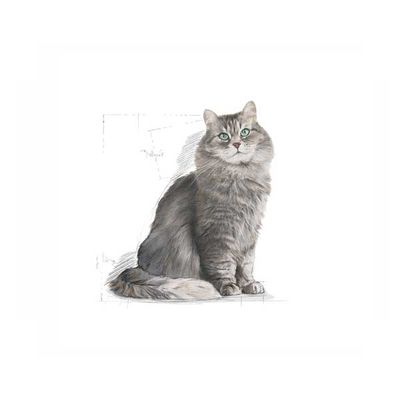 Royal Canin Sensible Kedi Maması 15 KG