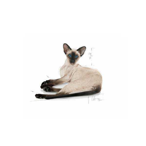 Royal Canin Siyam Kedi Maması 2 KG
