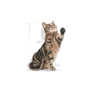Royal Canin Sterilised Kısırlaştırılmış Yaşlı Kedi Maması 3,5 KG