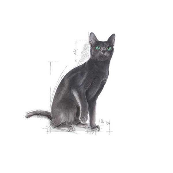 Royal Canin Sterilised Kısırlaştırılmış Kedi Maması 10 KG