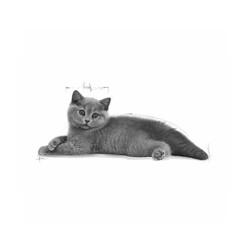 Royal Canin Yavru British Shorthair Kedi Maması 2 KG - Thumbnail