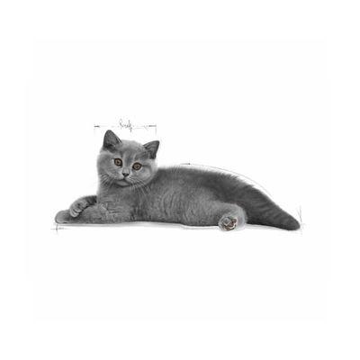 Royal Canin Yavru British Shorthair Kedi Maması 2 KG