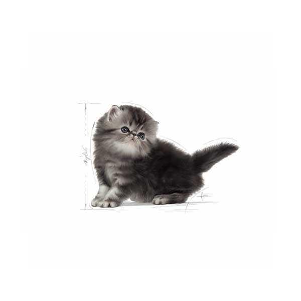 Royal Canin Kitten Persian Kedi Maması 2 KG