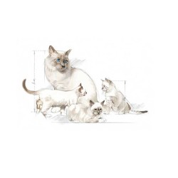 Royal Canin Yavru Kedi Süt Tozu 300 GR - Thumbnail