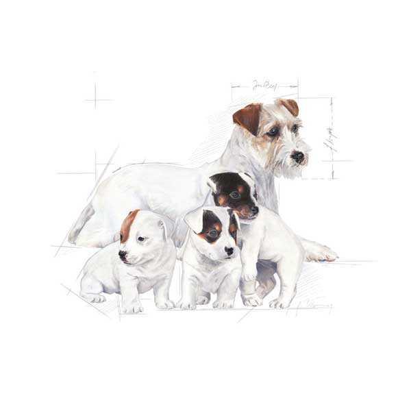 Royal Canin Yavru Köpek Süt Tozu 400 Gr
