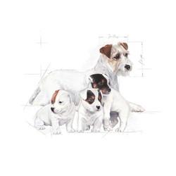Royal Canin Yavru Köpek Süt Tozu 400 Gr - Thumbnail