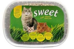 Sweet - Sweet Kedi Çimi