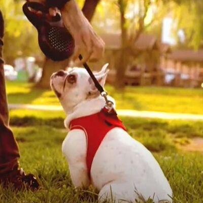 TailPetz Köpek Yeleği Kırmızı Small