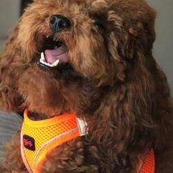 TailPetz Köpek Yeleği Pembe Medium - Thumbnail