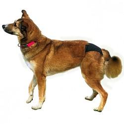 Trixie Hijyenik Köpek Külodu Xs 20–25 cm, Siyah - Thumbnail
