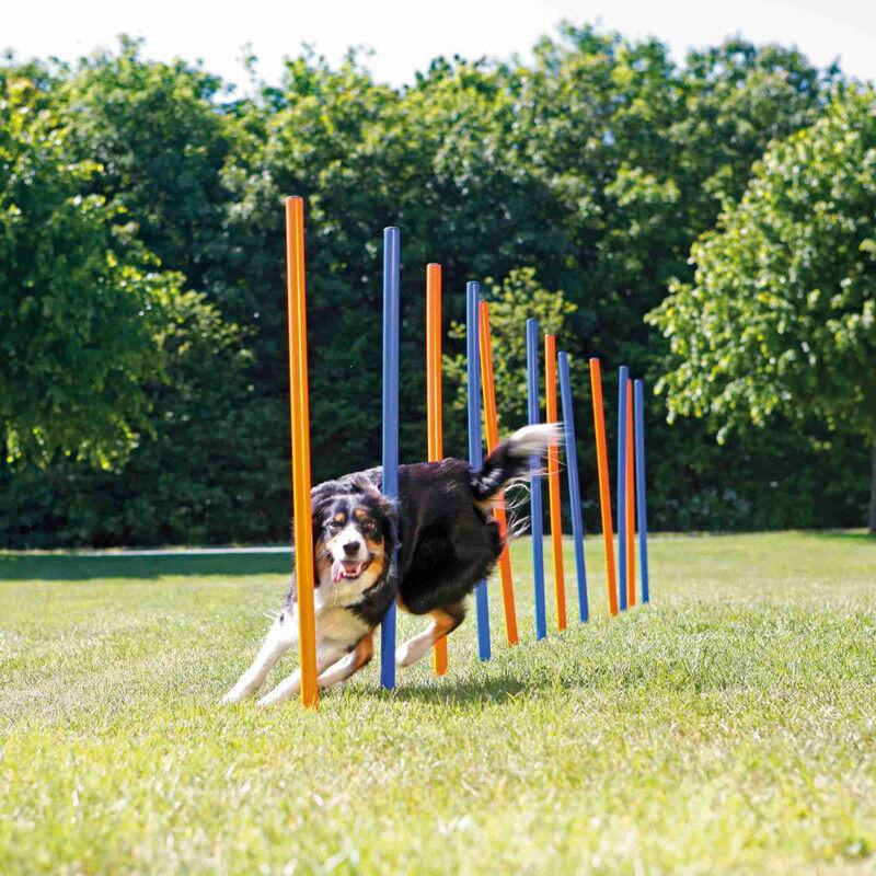 Trixie Köpek Agility Eğitim Direkleri