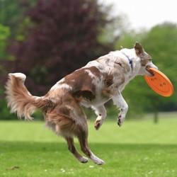 Trixie Köpek Agility Eğitim Frizbisi , Ø23cm - Thumbnail