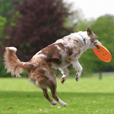 Trixie Köpek Agility Eğitim Frizbisi , Ø23cm