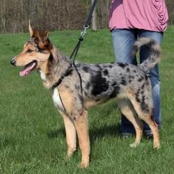 Trixie - Trixie Köpek Yürüme Eğitim Tasması XL55-80cm 25mm