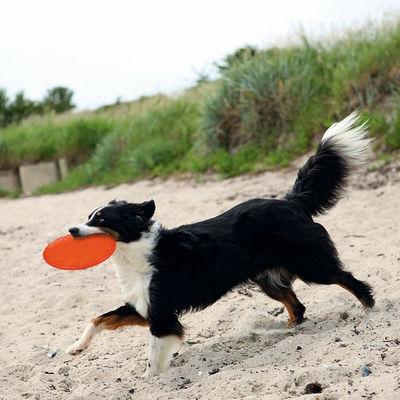 Trixie Köpek Yüzen Termoplastik Kauçuk Frizbi 18cm