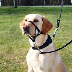 Trixie Uzman Köpek Eğitim Tasması S 22cm - Thumbnail