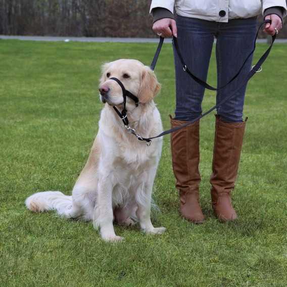Trixie Uzman Köpek Eğitim Tasması XL 46cm