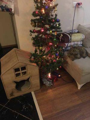Woofy Catsy 17-A Kedi Evi